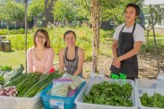 Fresh herbs, greens from Vang Family Gardens grown in Wasilla.