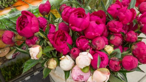 Peonies from Duane Clark, Country Health Foods.